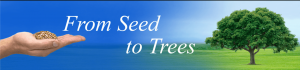 from_seed_to_trees